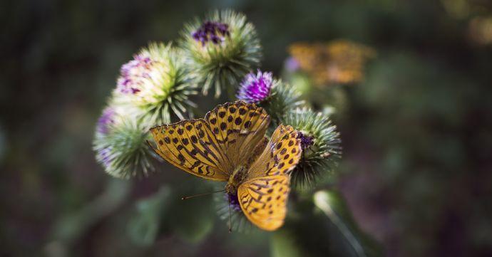 Motýľ v prírode
