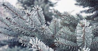 BeWooden - 5 spôsobov, ako si vybrať vianočný stromček v súlade s prírodou