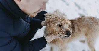 BeWooden - O psích členoch nášho tímu