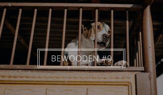 BeWooden - Spravodajca #9